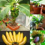 FASHCOOL Banana Fruit Seeds Garden Bonsai Seeds Garden Planting Fruit Tree Seeds DEALS for 2018