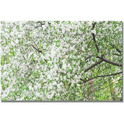 "Trademark Fine Art ""Flowers in the Trees"" Canvas Wall Art by Ariane Moshayedi"