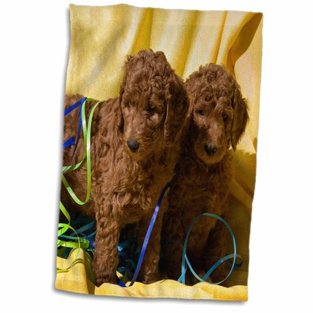 3dRose USA, California. Standard Poodle puppies with yellow background. - Towel, 15 by 22-inch