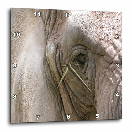 3d Rose Kind Giant, Elephant, Wall Clock, 10 By 10 Inch by 3d Rose