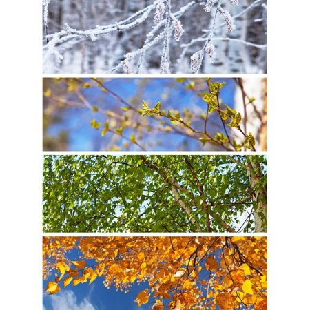 Collage. Birch Tree. Four Seasons. ?alendar Print Wall Art By katvic