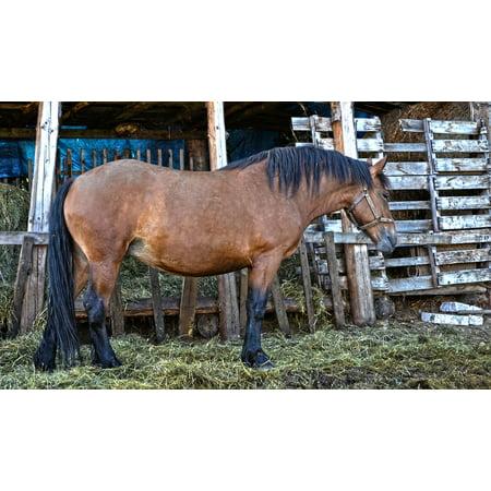 LAMINATED POSTER Nature Horse Animal Economy Range Poster 24x16 Adhesive Decal