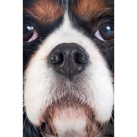 Cavalier King Charles Spaniel Vol.1 Notebook & Journal. Productivity Work Planner & Idea Notepad : Brainstorm Thoughts, Self Discovery, to Do