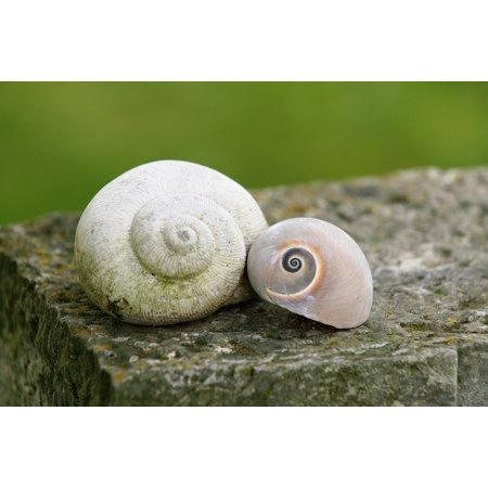 Carbon dating snail shell