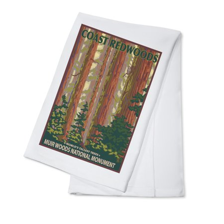 Muir Woods National Monument  California   Forest View   Lantern Press Artwork  100  Cotton Kitchen Towel
