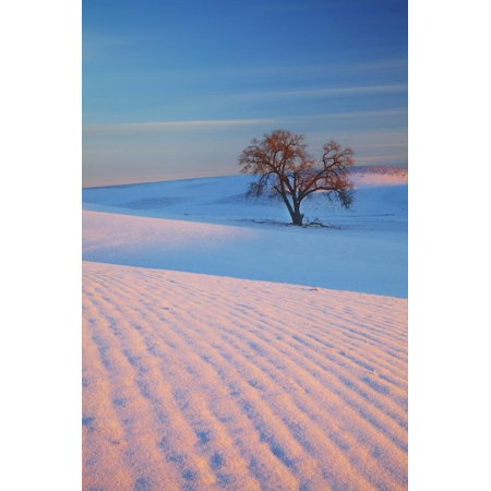 Washington, Sunset Bathed Lone Tree in Snow Covered Winter Field Print Wall Art By Terry Eggers