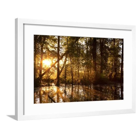 - Sunrays Shine Through Trees at Sunrise in Western Montana Framed Print Wall Art By James White