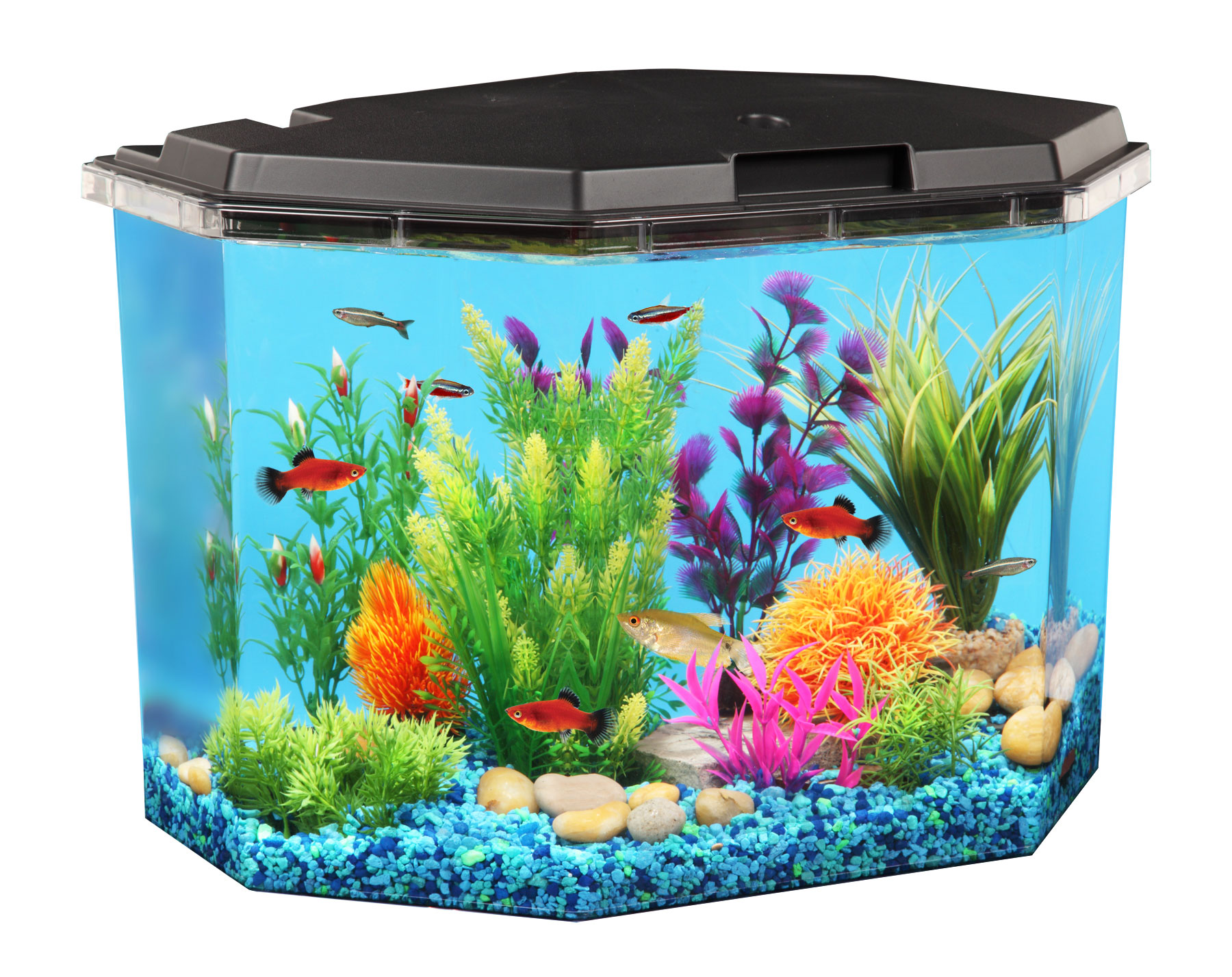 Aqua Culture 6.5-Gal Semi-Hex Aquarium Kit by Kollercraft