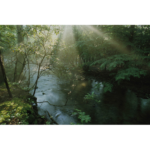 Brewster Home Fashions National Geographic Forest Stream with Sunbeams Wall Mural