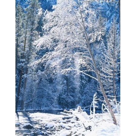 Snow Covered Trees Along Merced River Yosemite Valley Yosemite National Park California Poster Print By Scott T Smith