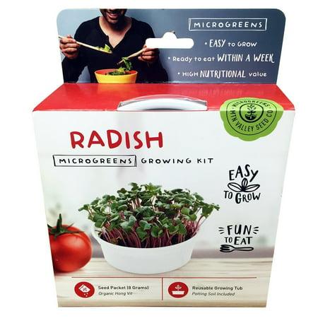 Own Sandwich (Mini Microgreens Growing Kit - Radish - Grow Your Own Organic Gourmet Micro Greens Indoors: Salad, Sandwich & Garnish - Easy & Fun - Great Gift or Stocking Stuffer)