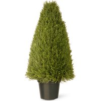 "36"" Upright Juniper w/ Green Pot"