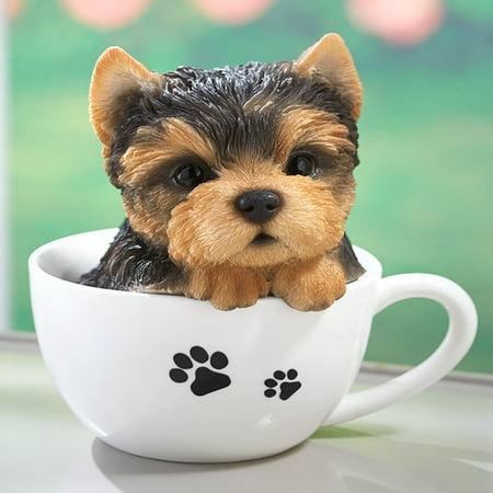 Teacup Pup Yorkie (Teacup Pup Yorkie)