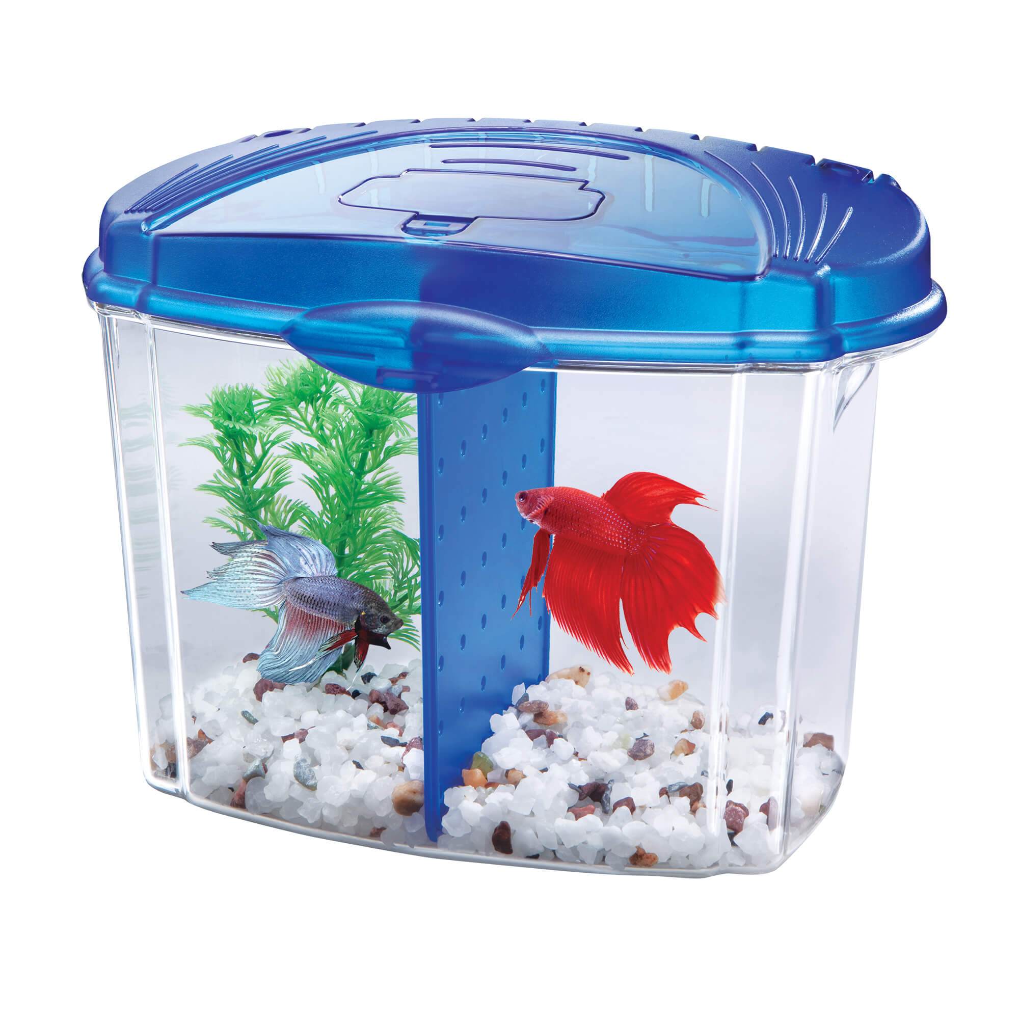 Aqueon Betta Bowl Aquarium Kit, 0.5 Gal by AQUEON PRODUCTS-SUPPLIES