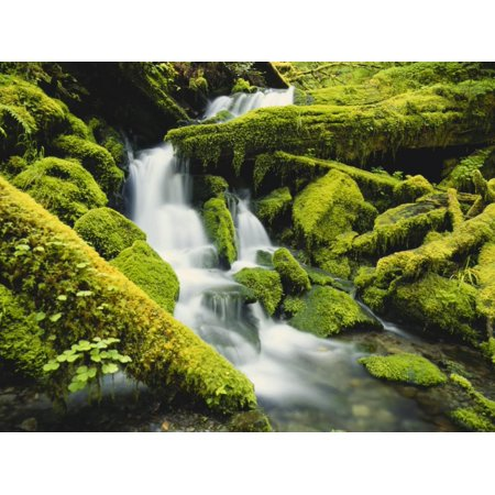 Waterfall over Moss Covered Rock, Olympic National Park, Washington, USA Print Wall Art By Stuart Westmoreland
