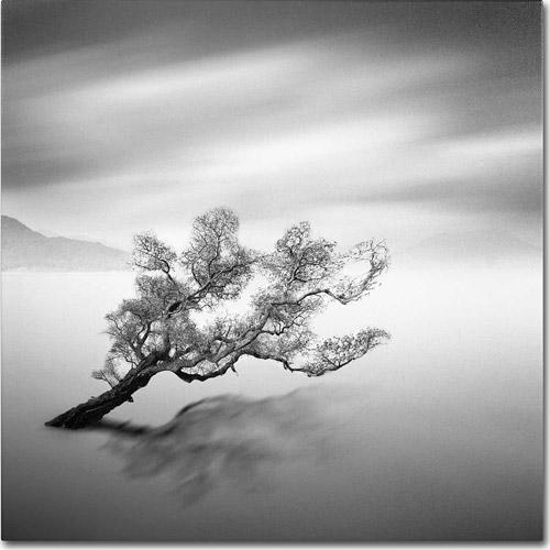 "Trademark Fine Art ""Water Tree VI"" Canvas Art by Moises Levy"