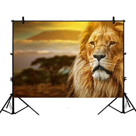 PHFZK 7x5ft Sunset Nuture Backdrops, African Animal Lion on Savanna Landscape Photography Backdrops Polyester Photo Background Studio Props - Detroit Lions Background