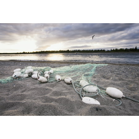 Bristol Bay Fishing - A Gill Net Used For Sockeye Salmon Fishing Stretches Towards The River From The Sandy Bank At Sunset With A Single Bird In Flight On The Shore Of The Kvichak River Bristol Bay Alaska United States Of