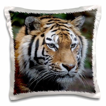 3dRose Wildlife Tiger - Pillow Case, 16 by 16-inch ()
