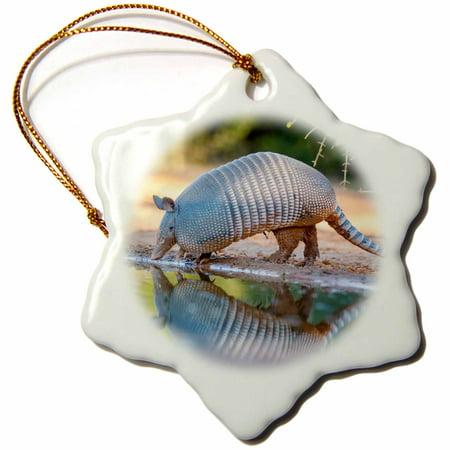 3dRose Nine-banded Armadillo, Dasypus novemcinctus, drinking - Snowflake Ornament, 3-inch
