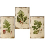 Set of 3 Weathered Distressed Finish Beige Acorns and Leaves Wall Art Decorations 17.75""