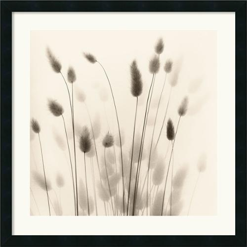 Amanti Art Framed Artwork Print 'Italian Tall Grass No. 1' by Alan Blaustein 26 x 26-inch by Overstock