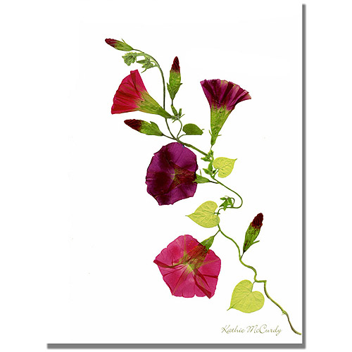 "Trademark Art ""Morning Glories"" Canvas Art by Kathie McCurdy"