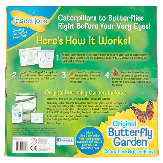 insect lore original butterfly garden caterpillars to butterflies growing kit ages 4 walmartcom - Live Butterfly Garden