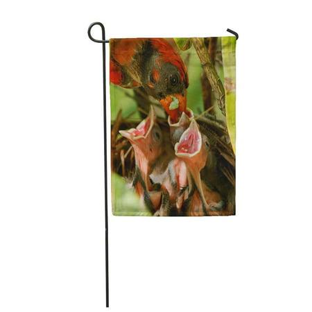 LADDKE Male Cardinal Brings Green Worm Caterpillar to The Nest Feed Garden Flag Decorative Flag House Banner 12x18 - Cardinal Nest