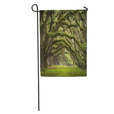- LADDKE Oaks Avenue Charleston Sc Plantation Live Trees Forest Landscape in Ace Basin South Carolina Lowcountry Garden Flag Decorative Flag House Banner 12x18 inch