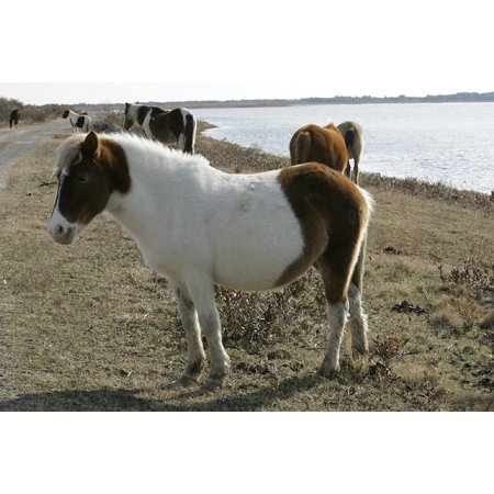 - Framed Art For Your Wall Ponies Grazing Wild Ponies Chincoteague Island 10x13 Frame