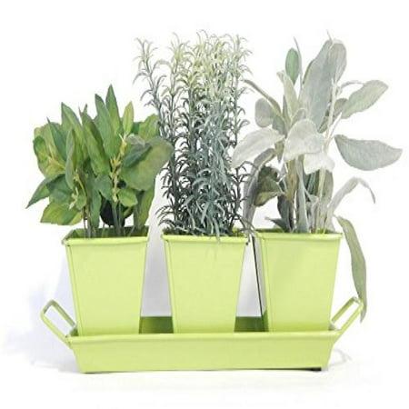 indoor herb garden kit lime green - Indoor Herb Garden Kit