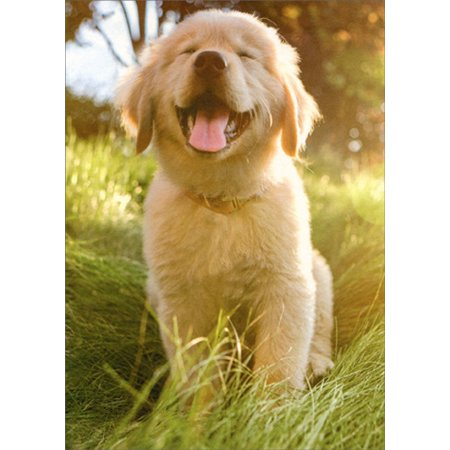Avanti Press Smiling Golden Retreiver Puppy Dog Deluxe Matte Blank Card