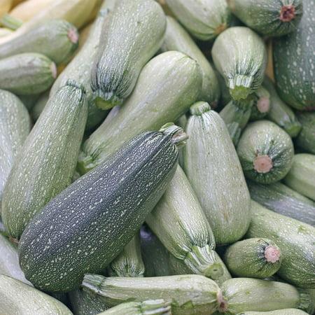 Grey Zucchini Summer Squash Garden Seeds - 1 Oz - Non-GMO, Heirloom - Vegetable Gardening Seed -