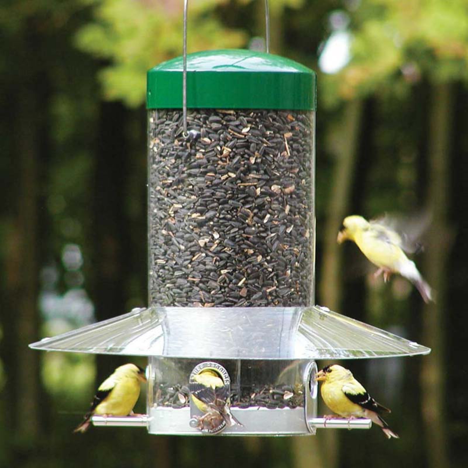 Birds Choice Hanging Birdfeeder with Baffle Weather Guard by Backyard Nature Products Inc