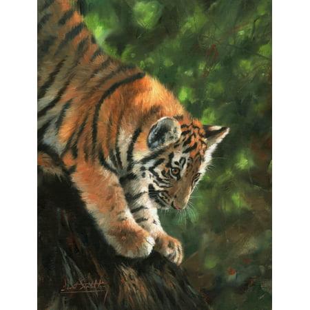 Tiger Cub Climbing Down Tree Stretched Canvas - David Stribbling (22 x 28)
