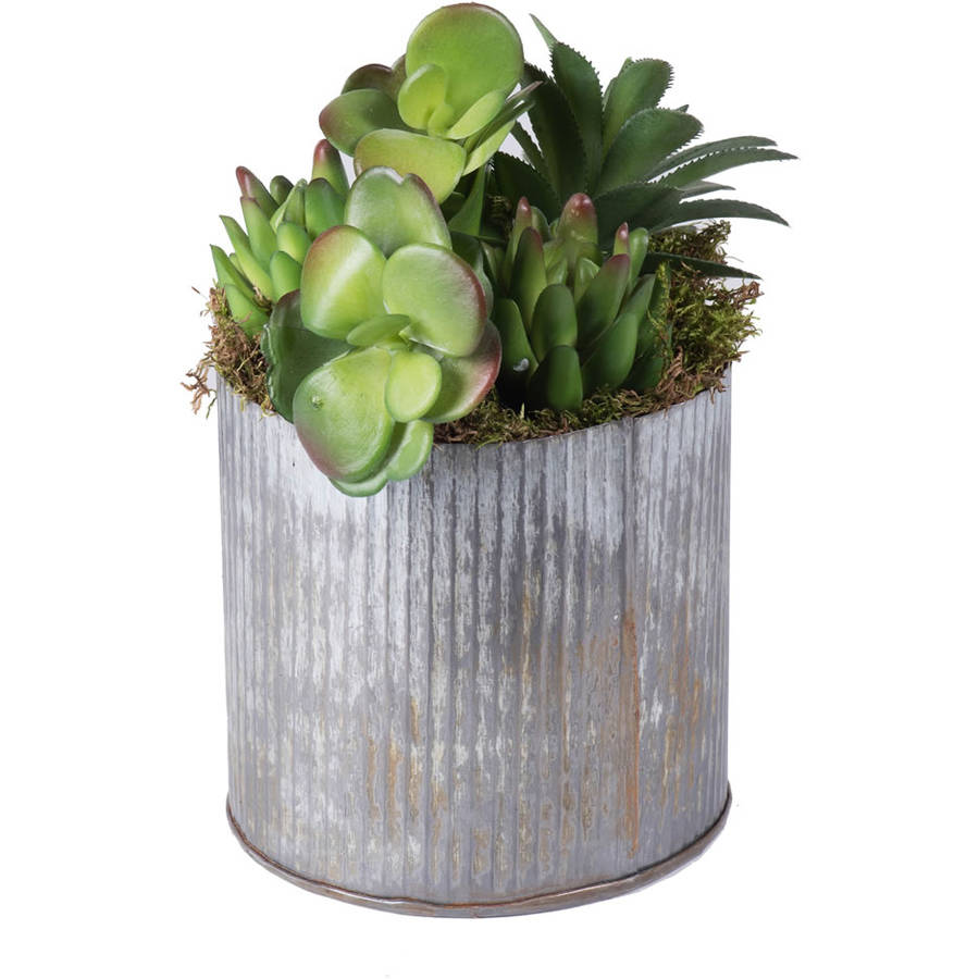 """Vickerman 9"""" Rustic Tin Container with a Variety of Succulents Plants"""