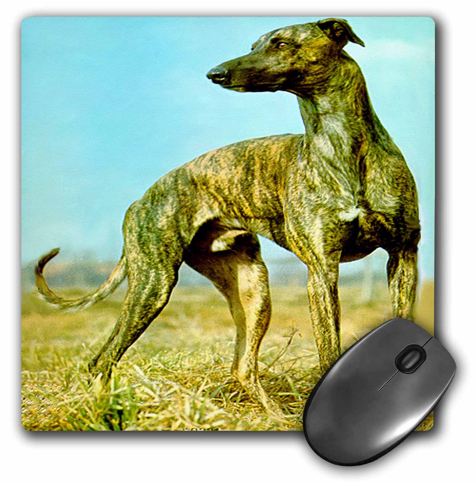 3dRose Brindle Greyhound, Mouse Pad, 8 by 8 inches
