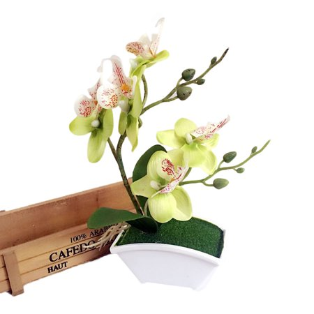 Double Fork Butterfly Orchid Plant Bonsai Creative Flower Arranging