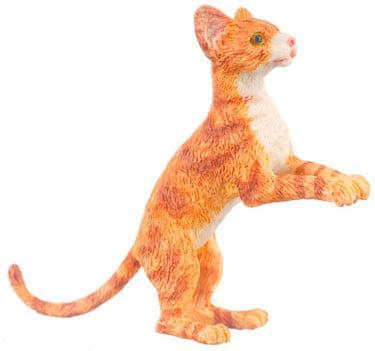 Dollhouse Cat, Orange