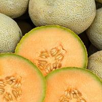 Cantaloupe Melon Garden Seeds - Edisto 47 - 4 Oz - Non-GMO, Heirloom, Vegetable Gardening Seeds - Fruit