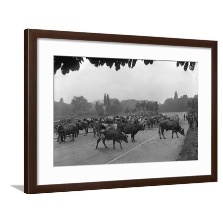 Longchamp Racecourse Transformed into a Cattle Enclosure, Near the Mill of Longchamp, Paris, 1914 Framed Print Wall Art By Jacques Moreau