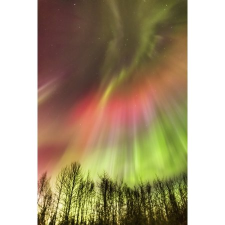 Posterazzi Northern Lights in the sky above the Tony Knowles Coastal Trail Winter Anchorage Coastal Refuge Anchorage Southcentral Alaska USA Canvas Art - Kevin Smith  Design Pics (24 x 38)