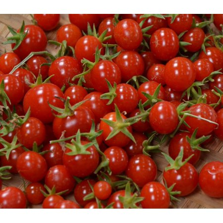 Sweet Million Cherry Tomato 4 Live Plants - Up to 2000 (Pear Tomato Plants)