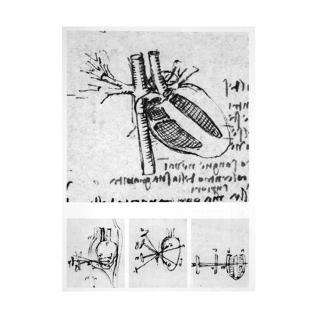Heart Anatomy, 16th Century Print Wall Art By Science Photo Library
