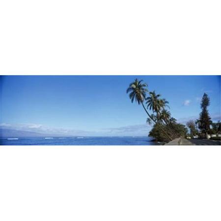 Panoramic Images PPI127276L Palm trees on the coast  Lahaina  Maui  Hawaii  USA Poster Print by Panoramic Images - 36 x (Maui Jim Nine Palms)
