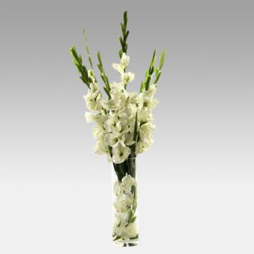 Gladiolas in Tall Glass Vase