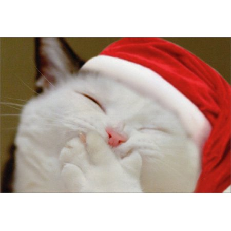 Nobleworks Smiling Kitten with Paw Over Mouth Cute Cat Christmas (Smiling With The Mouth Of The Ocean)