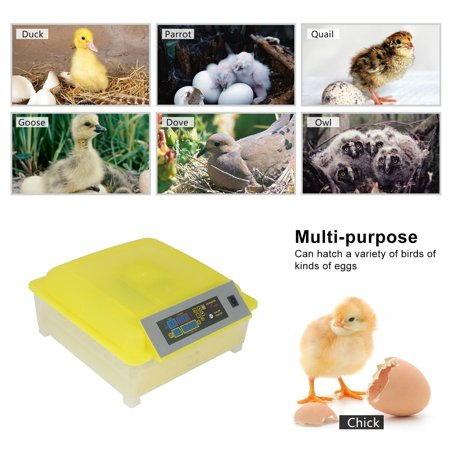 Zimtown Automatic Digital Clear Egg Incubator Hatcher Turning Temperature Control For Quail, Chickens, Ducks, Pigeons Eggs ()