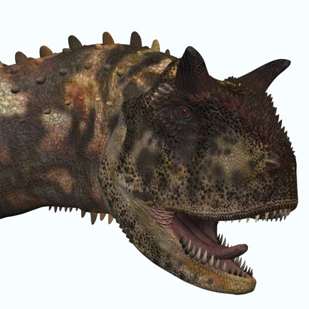 Carnotaurus was a theropod carnivorous dinosaur that lived in Argentina during the Cretaceous Period Poster Print